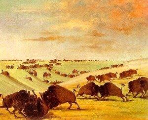 Many Buffalo