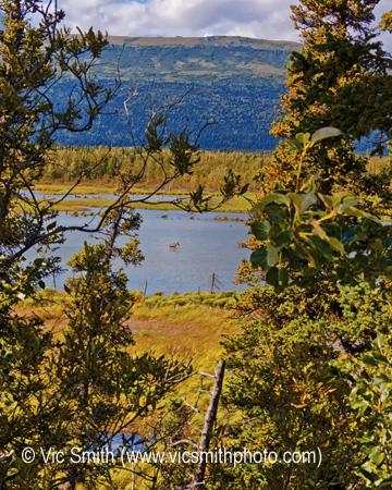 Moose Water